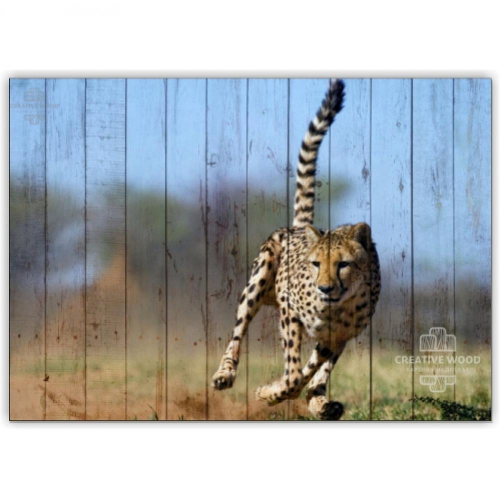Африка - Леопард