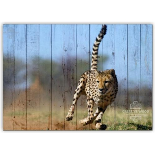 Painting on boards Africa - Leopard