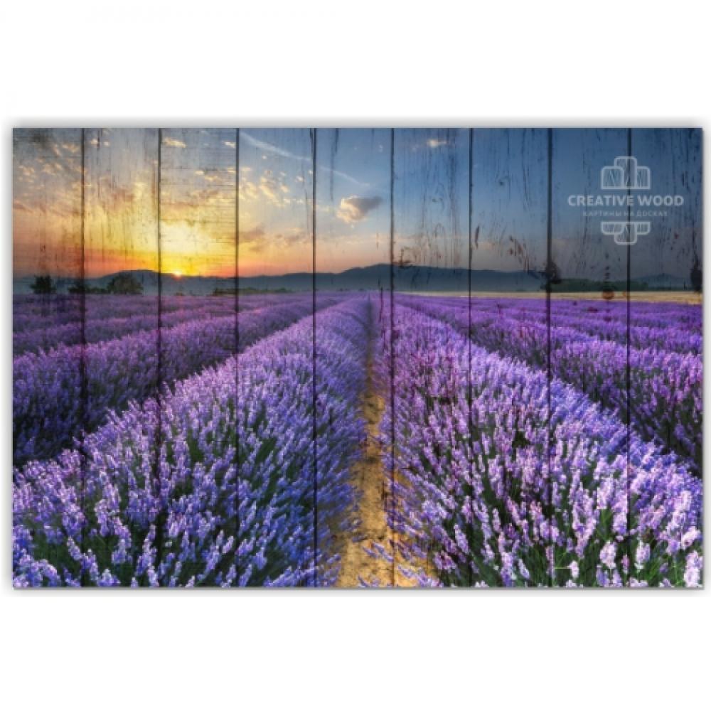Nature - Lavender