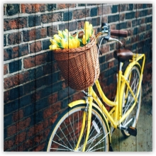 Collection: Bicycles