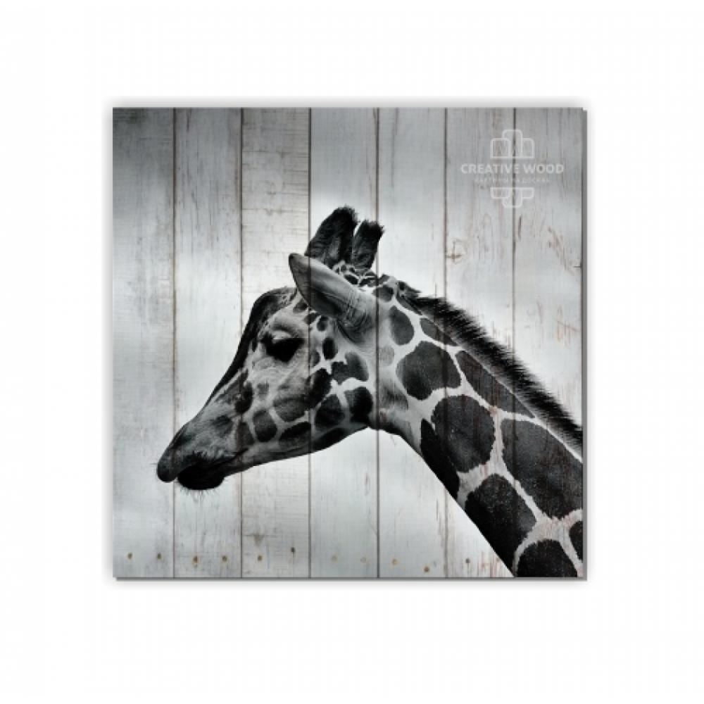 ZOO  — Жираф
