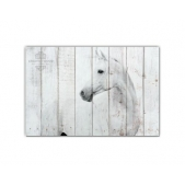 ZOO  — Белая лошадь