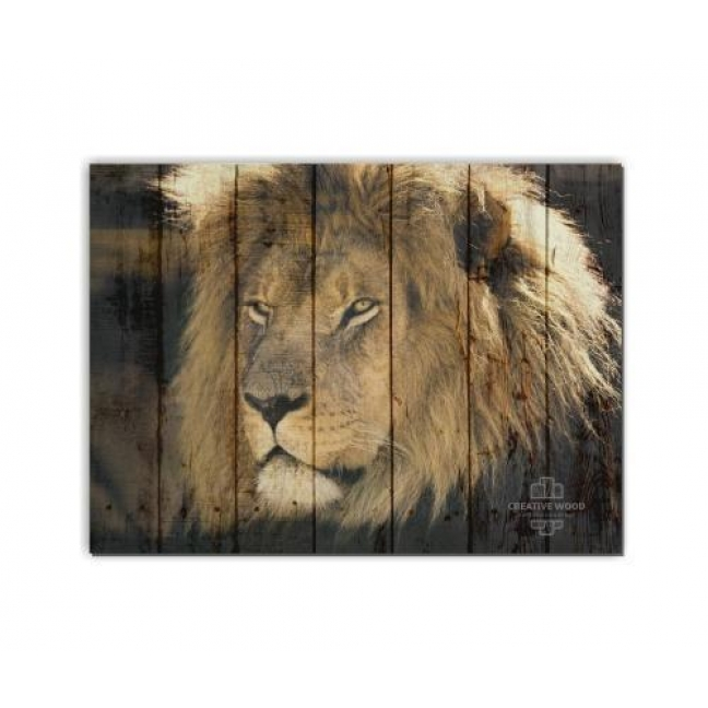 Painting on boards ZOO - The lions view