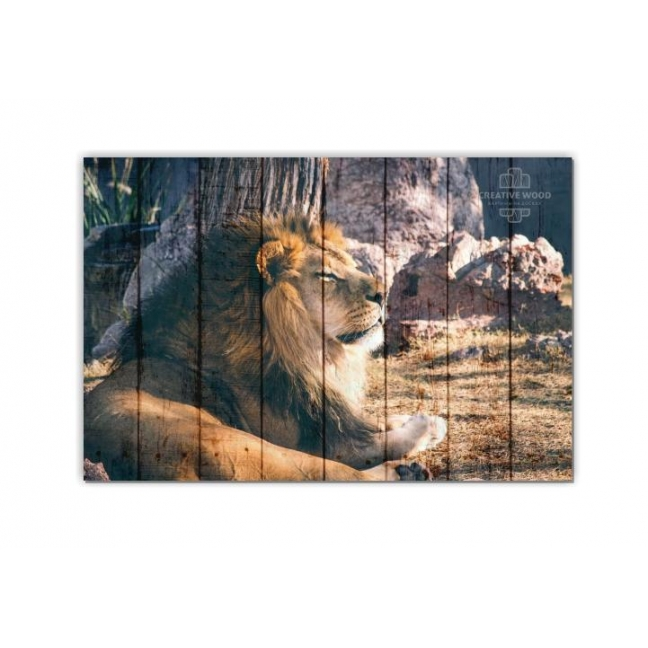 Painting on boards ZOO - Lion