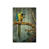 ZOO  — Попугай