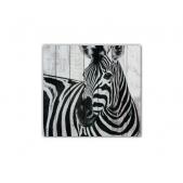 ZOO  — Zebra