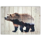 Picture on the boards - Bear double exposure
