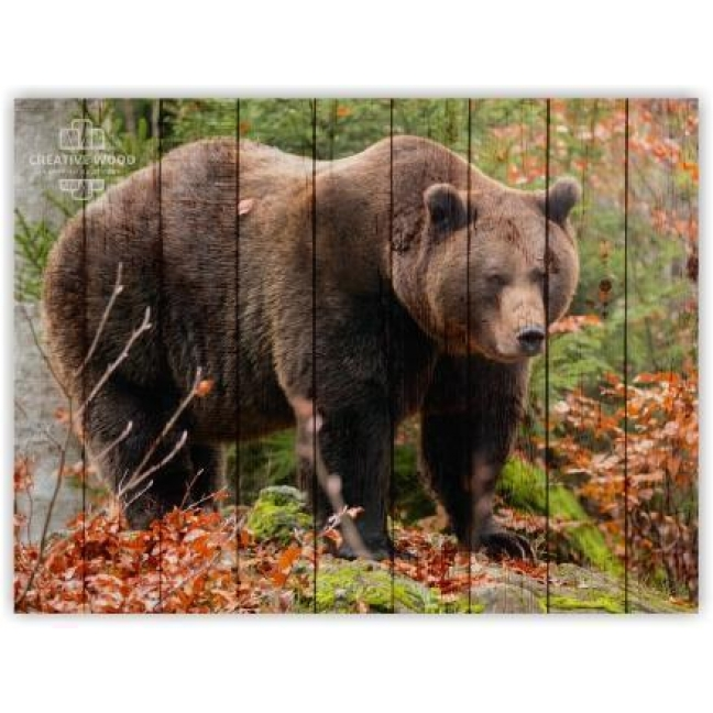 Painting on boards ZOO - Bear in the Woods