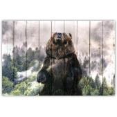 ZOO  — Медведь