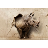 Picture on the boards ZOO - Rhinoceros