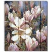 Flowers - Magnolia