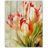 Flowers - Tulips